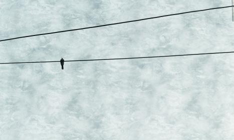 Poetry_Bird